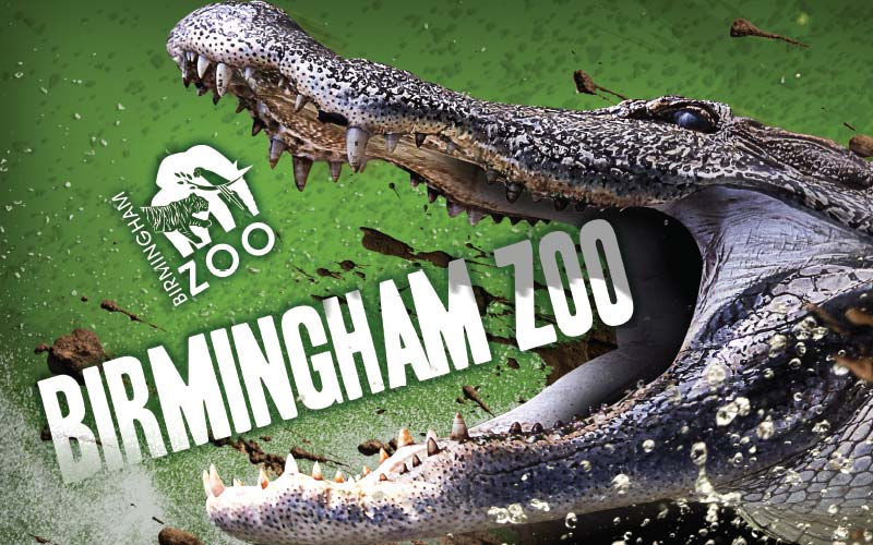 Birmingham Zoo Billboards – High Energy Series