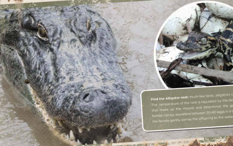 Birmingham Zoo Southern Bayou Exhibit Signs