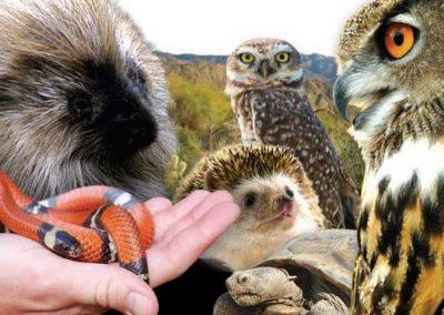 The Living Desert Wildlife on Wheels Rack Cards